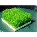EasyGreen Large Wheatgrass Tray