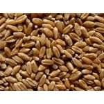 Mumm's Certified Organic Wheat Berries 1kg